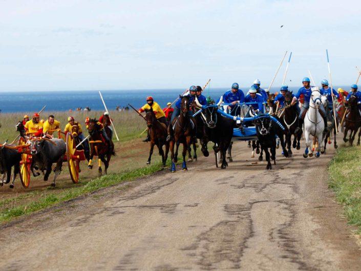 Corsa dei buoi nell'enclave di lingua albanese di Chieuti, in Molise. Marzo 2008